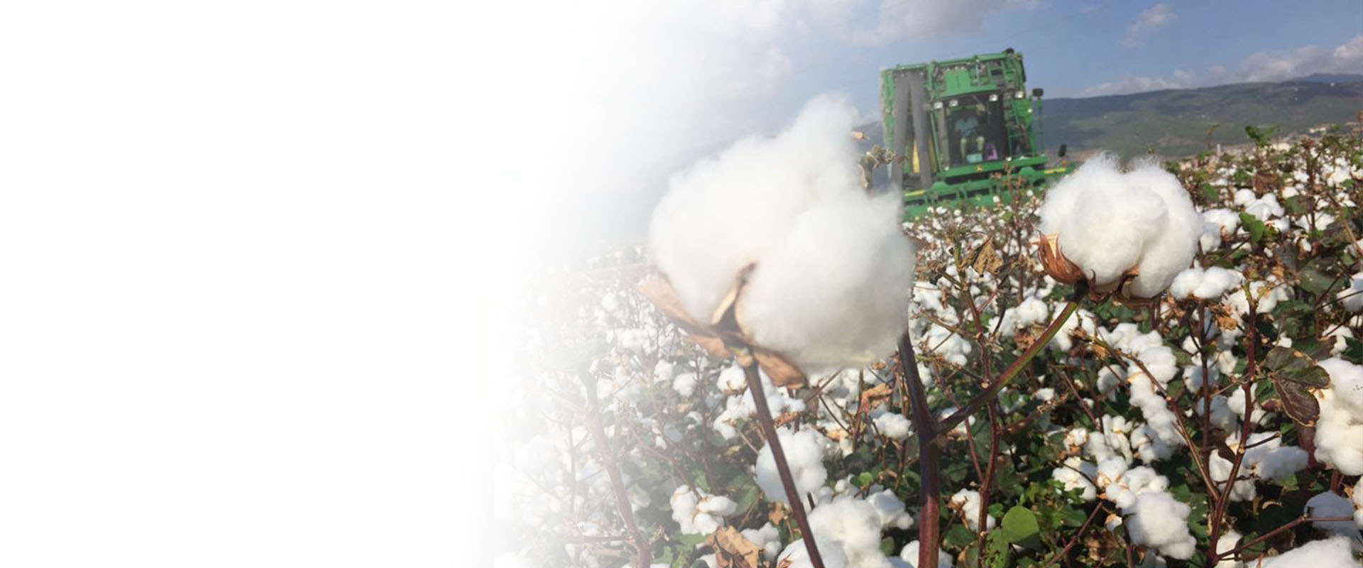 Cotton Trading