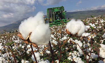 Global Cotton Trading